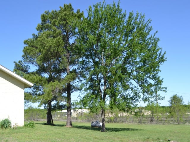 180 COUNTY ROAD 206- COMANCHE- Texas 76442, ,Homes With Acerage,For Sale,COUNTY ROAD 206,1075