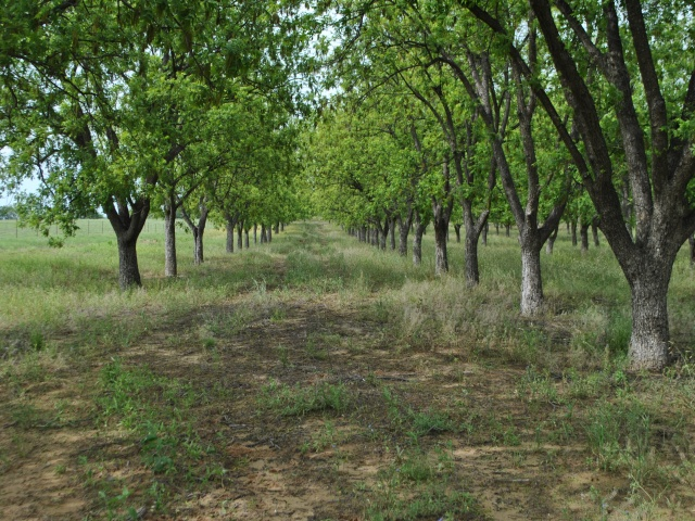 CR 446, Comanche, Texas 76442, ,Farm/Ranch,For Sale,CR 446,1095