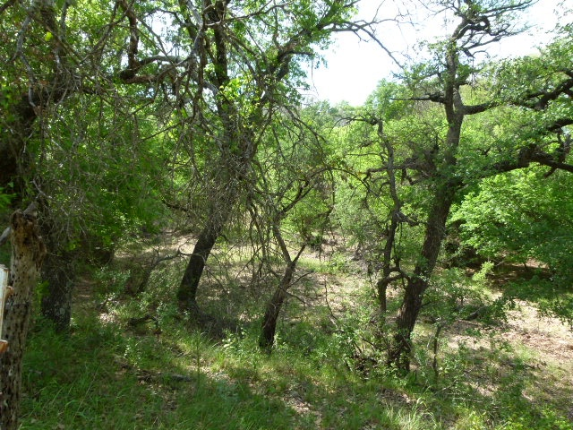 6001 US HWY 84-183 E, EARLY, Texas 76802, ,Farm/Ranch,For Sale,US HWY 84-183 E,1098